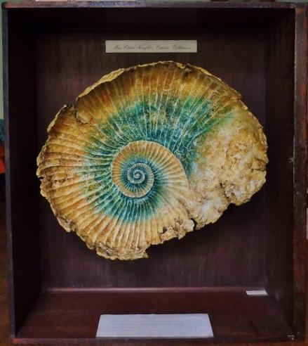 Seashore Specimens (x).