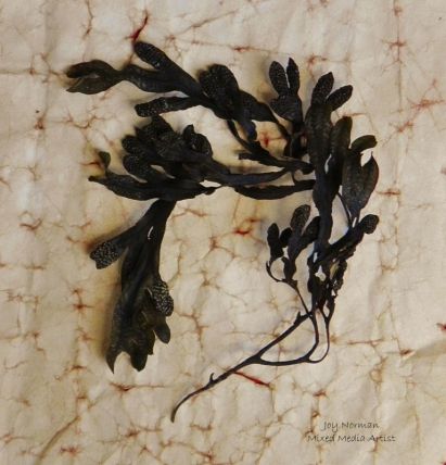 A very pleasing piece of seaweed